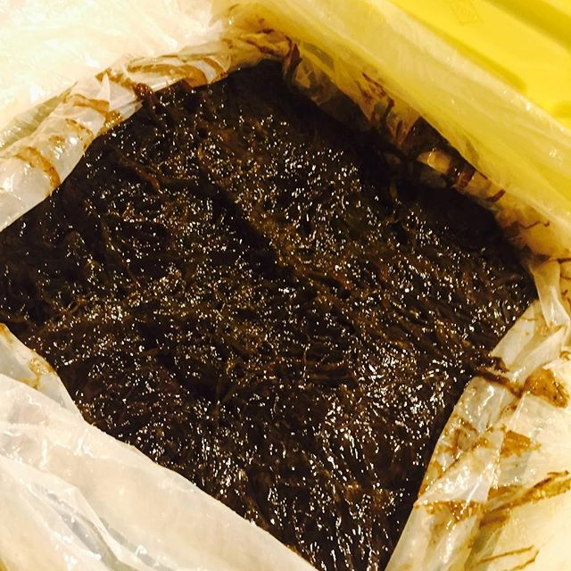 ブラッスリーピガール&六畳間️久米島産、一番生モズク入荷でーす️^_^