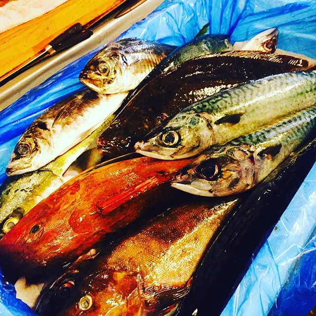 ブラッスリーピガール&六畳間️気仙沼〜ビンビンのお魚入荷️間もなくオープンでーす️
